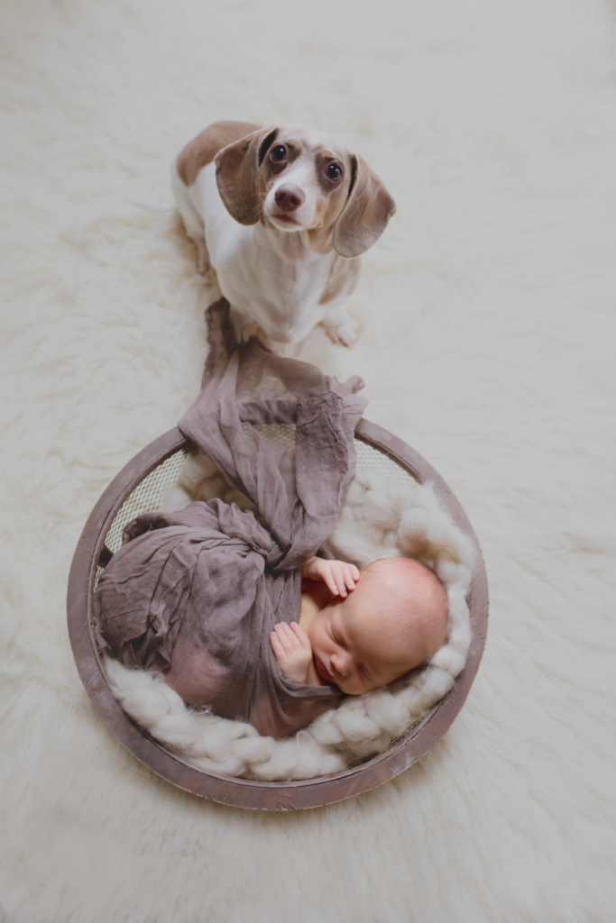hudson-and-pup